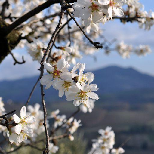 Primavera-Colline-Romagna-TRERè