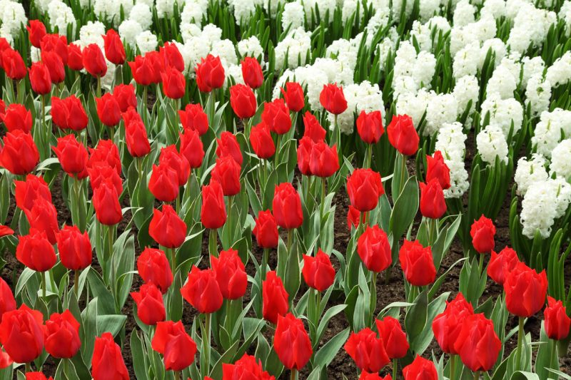 bandiera di fiori_trerè c